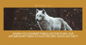 Quote image - #Quote #Wording #Saying #group #wolf #and #black #wildlife