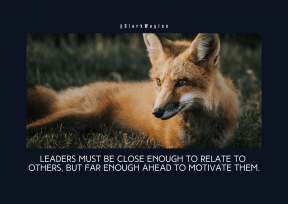 Quote image - #Quote #Wording #Saying #jackal #kit #red #fauna #fox #animal #wildlife #snout #terrestrial #dhole