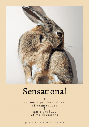 Quote image - #Quote #Wording #Saying #whiterabbit #cute #bunny #background