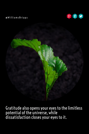 Quote image - #Quote #Wording #Saying #sign #product #healthy #line #leaf #angle #background
