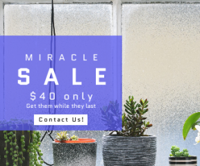 Square large web banner template for sales - #banner #businnes #sales #CallToAction #salesbanner #plant #luthermeb #indoor #potted #luther #minimal #houseplant
