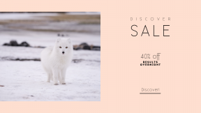 FullHD image template for sales - #banner #businnes #sales #CallToAction #salesbanner #iceland #snow #foc #bear #group #samoyed #nature #photography #ocean #antartica