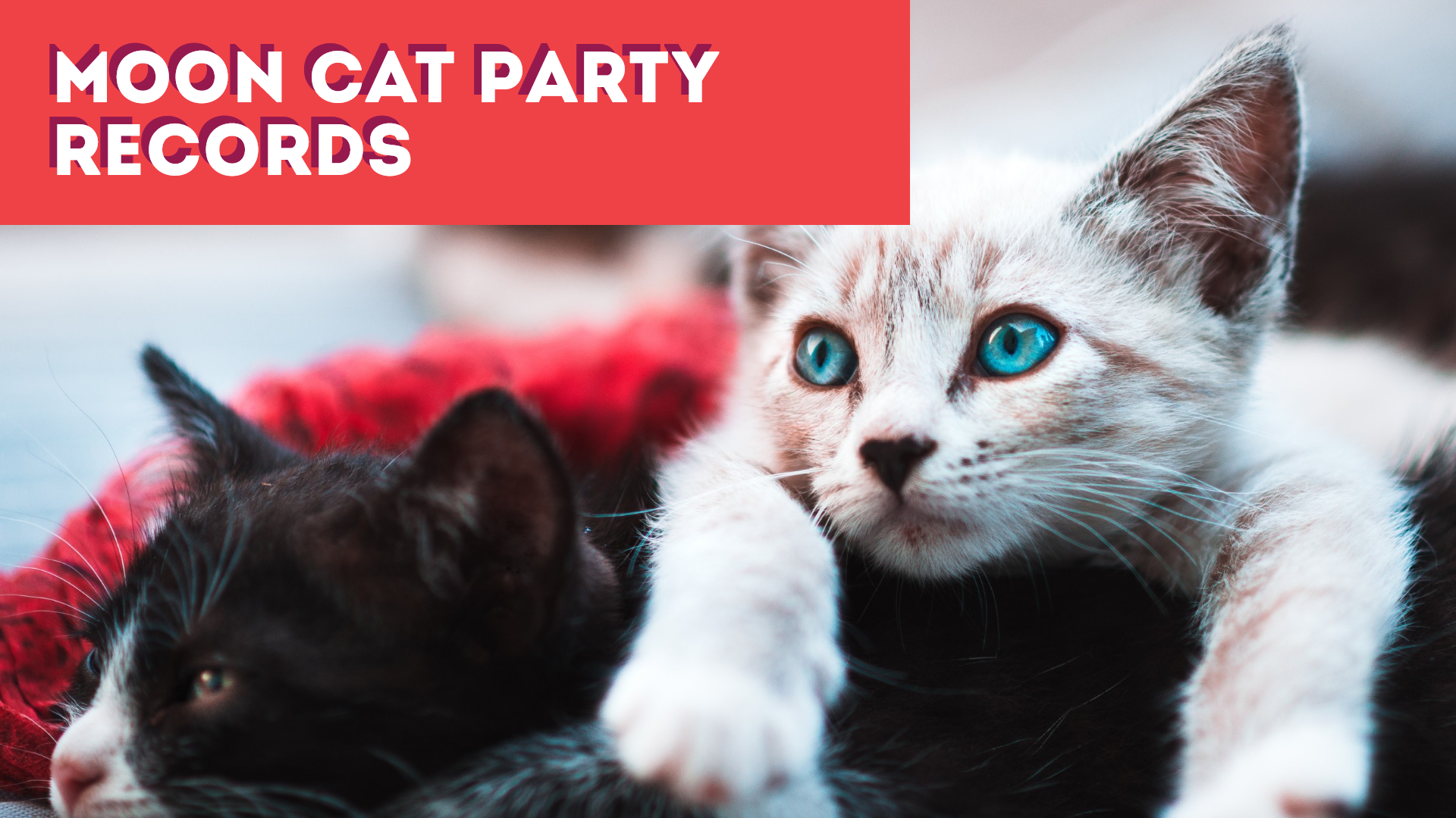 Party Cat Design  Template