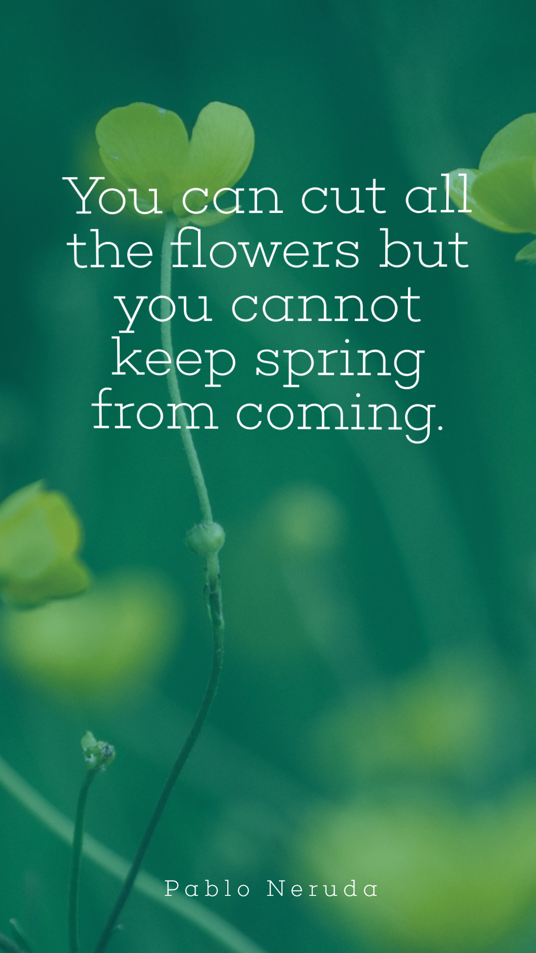 Spring Simple Quote Design - #quote Animation  Template