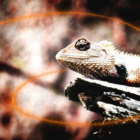Photo Overlay Design - #PhotoOverlay #PhotoFilter #Photography #OverlayImage #iguania #FireSparkles #organism #scaled #font #animal #lizard #up #jewelry