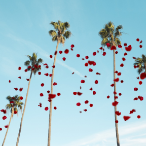 Photo Overlay Design - #PhotoOverlay #PhotoFilter #Photography #tree #bend #valentine's #breeze #OverlayPhoto #woman #text #ocean #palm #flexible