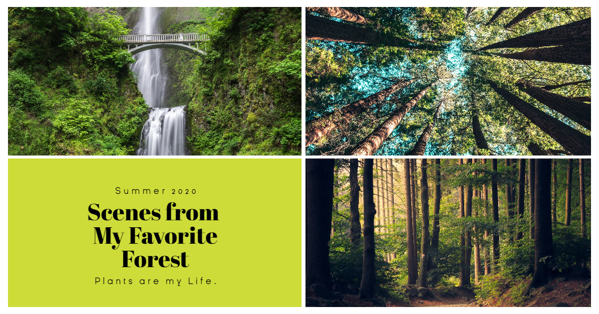 Green Nature Photo Book Collage Easy Design  Template