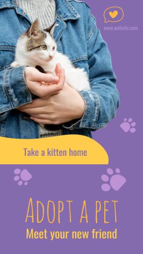 Adopt Cat Pet