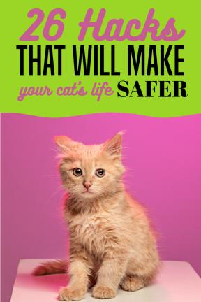 Pinterest Life Hacks Cats Pets