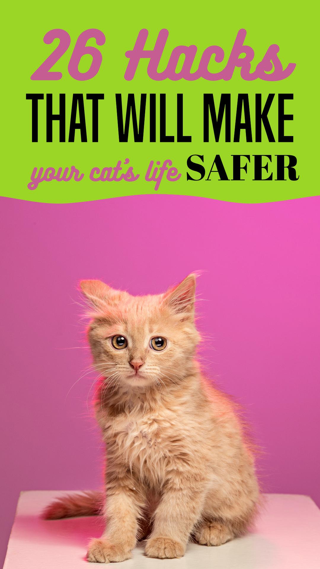 Pinterest Life Hacks Cats Pets Animation  Template