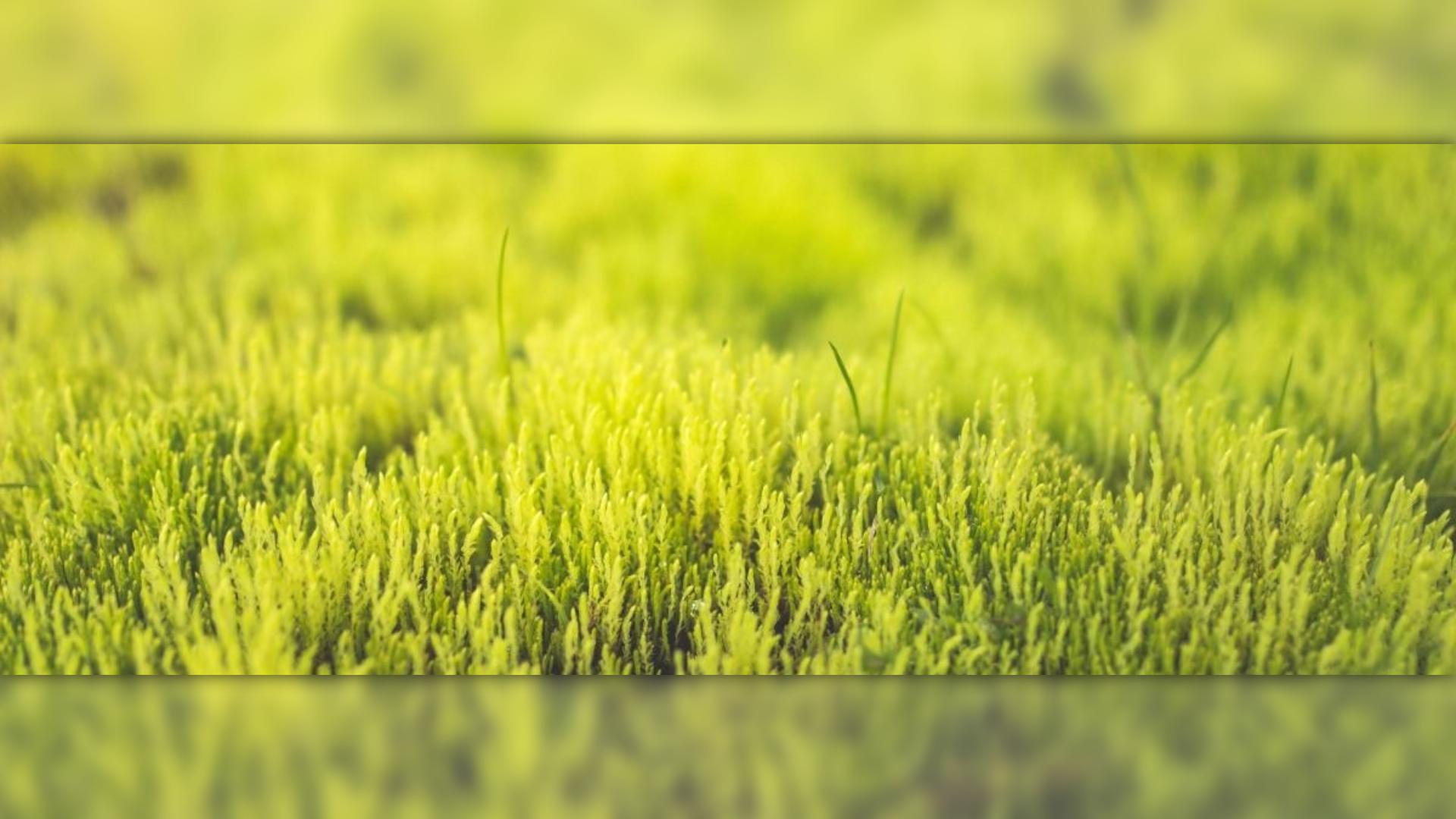 Profile image avatar effect - #image Design  Template