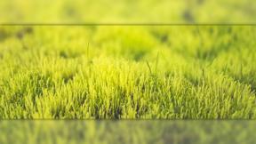 Profile image avatar effect - #image #avatar